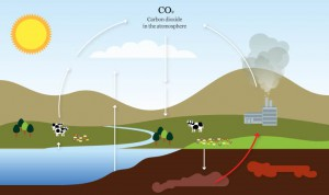 CO2 Cycle with Fossil Fuel Burning